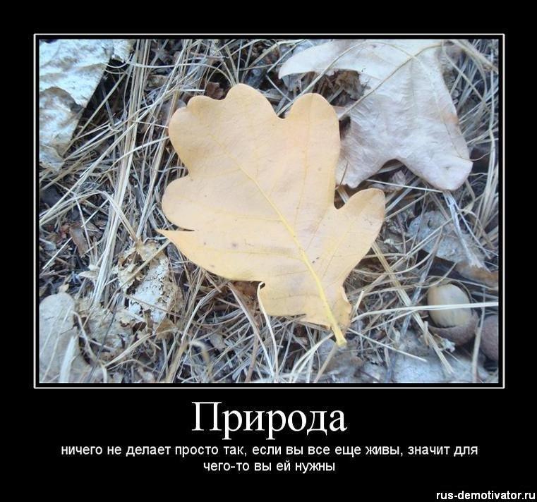 http://cs5631.vkontakte.ru/u41307074/101053298/y_23b6aaac.jpg